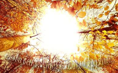 Дни леса в России. Снова осень, листья желтые кружат. Фоторамка для осенних сюжетов.