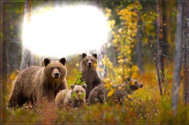 Дни леса в России.