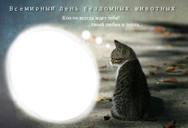 Всемирный день бездомных животных. День бездомных животных. Фоторамка с одиноким котом, мечтающем о хозяине. То, что на фотографии - его мечта. Надпись: Кто-то всегда ждет тебя! Твоей любви и тепла...