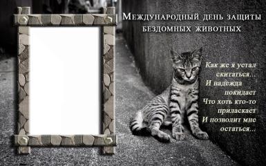 Всемирный день бездомных животных. Печальный уличный кот. Черно-белая рамка ко дню защиты бездомных животных. Как же я устал скитаться, и надежда покидает что хоть кто-то приласкает, и позволит мне остаться...