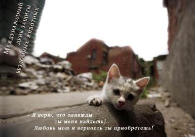 Всемирный день бездомных животных. День защиты бездомных животных. Рамка с уличным котенком. Я верю, что когда-то ты меня найдешь!.. Любовь мою и верность ты приобретешь.
