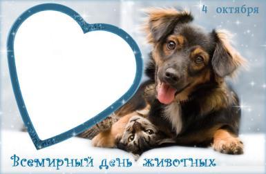 Всемирный день животных. Фоторамка, открытка. Собака и котенок обнимаются. Дружба кота и собаки. Рамка - сердце.