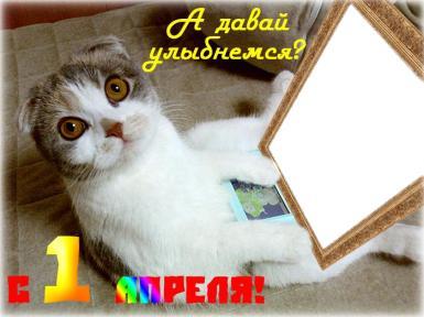 День смеха. А давай улыбнемся!. Открытка к 1 апреля. Сидящий котик разглядывает рамку с Вашим фото.