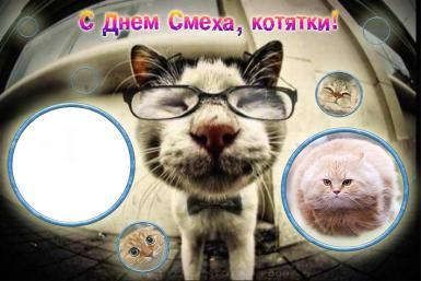 День смеха. С днем смеха, котятки!. Фоторамка-прикол. Котики и Ваше фото.
