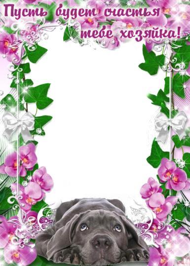 Всемирный день бездомных животных. Желаю счастья. Пусть будет счастья тебе хозяйка, собака, цветы