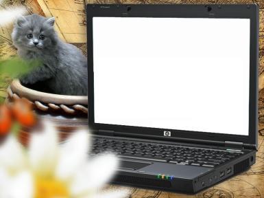 Приколы. Рамка, фотоэффект: Фоторамка на экране ноутбука. Фотоприкол, фотомонтаж. Ваше фото на экране ноутбука. Котенок смотрит на монитор.