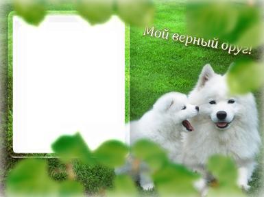 Мой верный друг!. Фоторамка с белыми собаками. Открытка для верного друга - собаки.