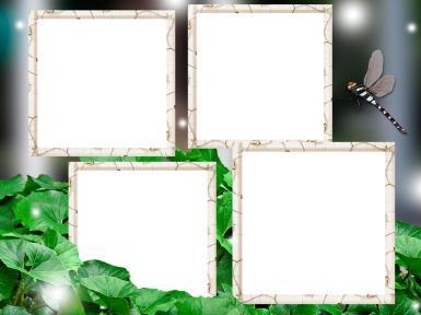 Зеленые, желтые рамки. Рамка, фотоэффект: Фоторамка со стрекозой. Четыре фотографии в рамке. Фоторамка на 4 фото. Стрекоза, зеленая лужайка. Сияние.