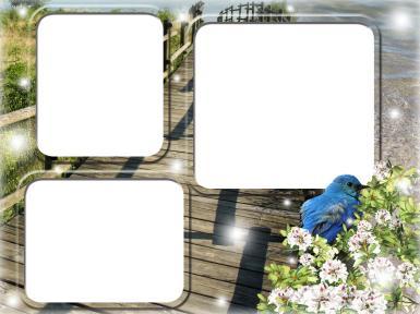 На каждый день. Рамка, фотоэффект: Тройная фоторамка с синей птицей. Открытка на счастье и удачу. Три фотографии в одной фоторамке. Мост, искры, сияние, синяя птица. Пожелать счастья. Птица счастья.