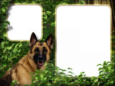 Мужские. Рамка, фотоэффект: Фоторамка с овчаркой. Двойная фоторамка с собакой. Овчарка, листва, лес.
