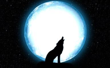 Фоторамка с одиноким волком. Фоторамка, волк на фоне луны. Волк воет на луну. Огромная луна, лунный свет. Ночное звездное небо.