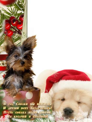 На новый год с собакой. В год Собаки мы вступаем И друзей всех поздравляем! Пусть собака будет доброй Не кусачей и большой