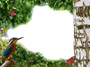 Новые рамки для фото. Рамка, фотоэффект: У березы. Фоторамка в стиле летнего леса. У березы птичка и бабочки.