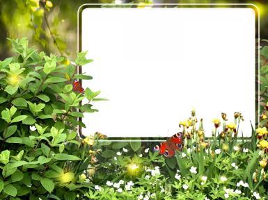 Зеленые, желтые рамки. Рамка, фотоэффект: Лето. Буйство летней зелени, цветов и бабочек, удачно подойдет для оформления жизнерадостной фотографии любимой подруги или родственника.