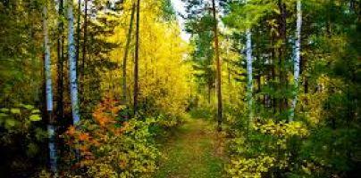 Дни леса в России