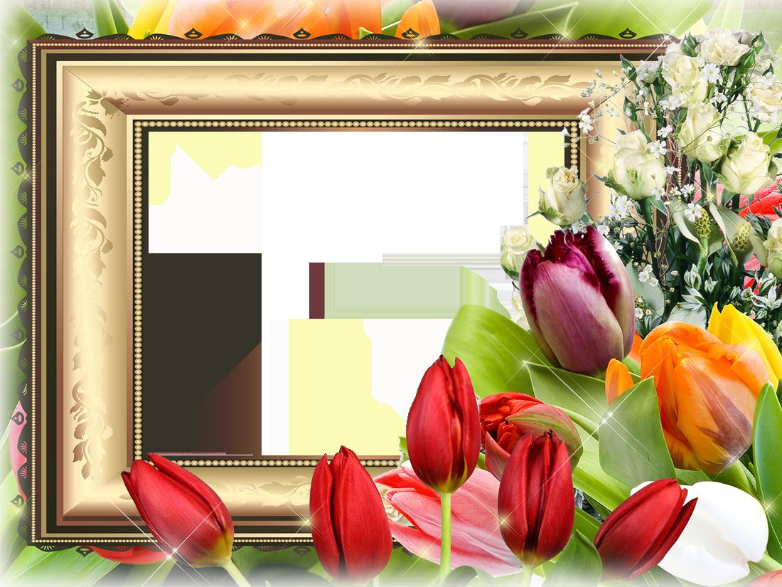 игнорируют вставить фото в рамку с тюльпанами наиболее распространенных