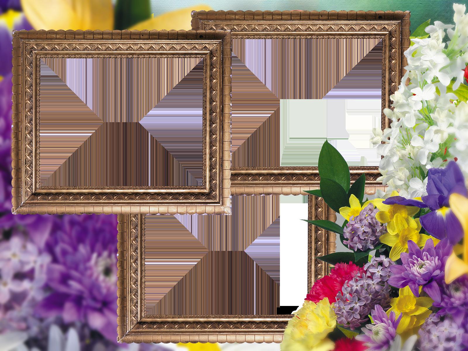 изменение рамок фотографии останков