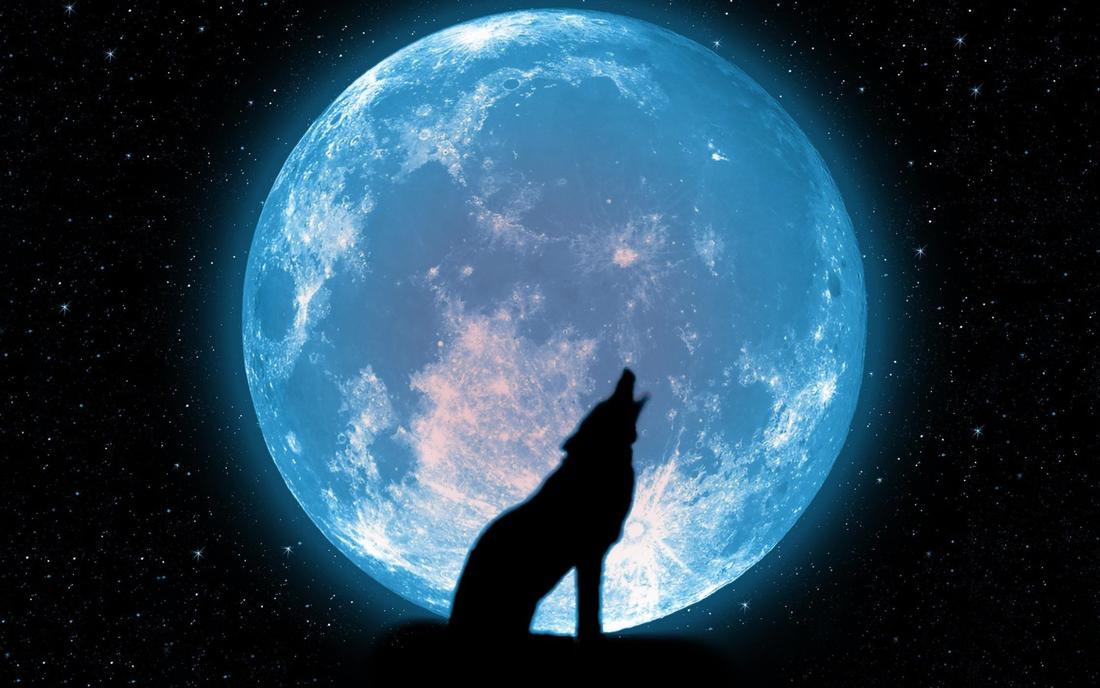 Фоторамка Фоторамка с одиноким волком Фоторамка для фотошопа, PNG шаблон. Фоторамка, волк на фоне луны. Волк воет на луну. Огромная луна, лунный свет. Ночное звездное небо.